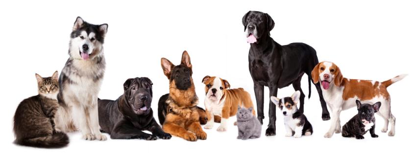 seguro-para-mascotas